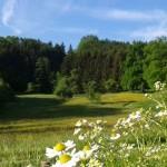 Eine Wiese mit Wald und Himmel im Vodergrund blühen Blumen