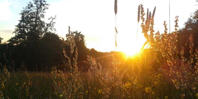 Kochergarten Sonnenuntergang