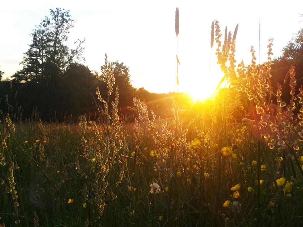Sonnenuntergang beim Koiserhock
