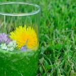 Kräuterrundgang – Grüne Smoothies und Brotaufstriche - ein Glas mit grünem Smoothie und Blütendekoration im Gras stehend