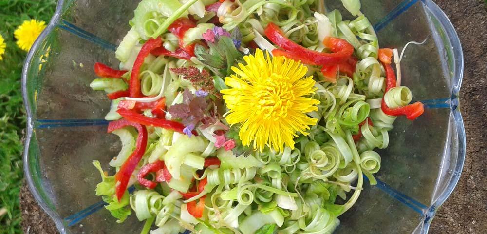 Kräuterrundgang – Wilde Hexenküche im Frühling zeigt eine Salatschüssel von oben fotografiert, mit Wildkräutersalat
