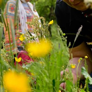 Kräuter und Blüten sammeln