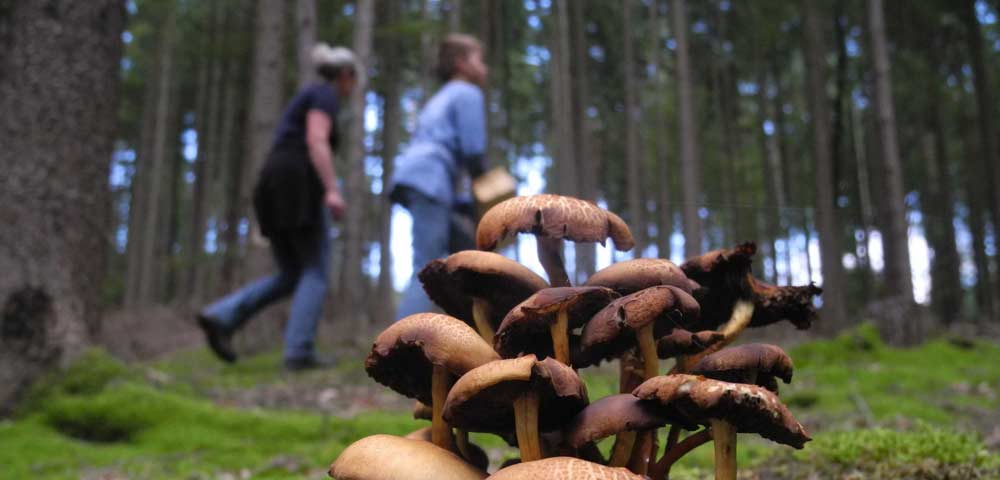 Kräuter- und Pilzrundgang